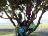 Up_a_Tree